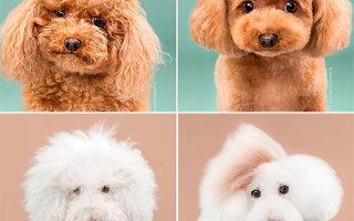 Фото собак до и после стрижки (18 фото)