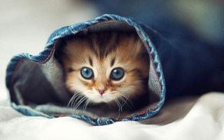 Фото «Котёнок-очаровашка»
