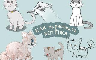 Рисуем котенка карандашом вместе с моим «котенком»))