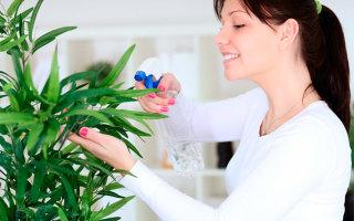 Домашние растения — помощники и лекари
