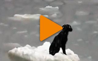 Видео «Счастливое спасение собаки из ледяного плена»
