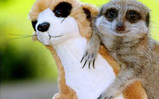 Животные и их мягкие двойники (14 фото)