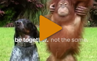 Видео «Любовь каждый день»
