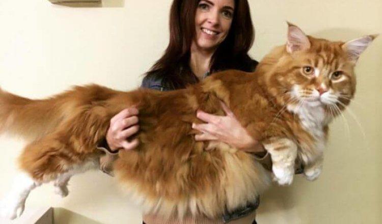 Этот кот просто огромен