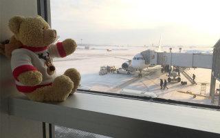 В екатеринбургском аэропорту Кольцово появился плюшевый VIP-пассажир