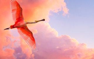 Красивые картинки бескрайнего лазурного неба