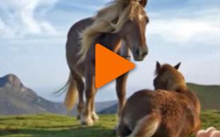 Видео «О Лошадях!»