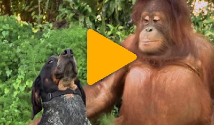 Видео «Дарите радость и заботу друг другу»