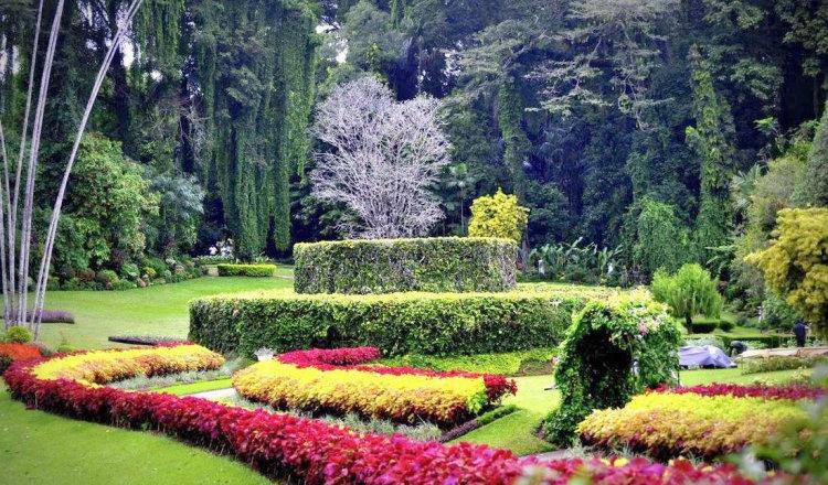 5 минут по Сиднею. Прогулка по королевскому ботаническому саду