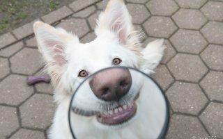 «Улыбайки» от собак (24 фото для поднятия настроения)