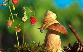 Фото «Сказочные моменты «маленького» мира» от Вячеслава Мищенко