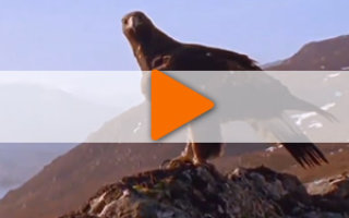 Видео «Радуйтесь чудесам жизни»