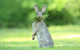 Смешные животные, присланные на конкурс комедийных фотографий дикой природы
