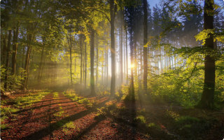 Тест «Прогулка по лесу»