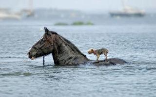 Животные, которые готовы прийти на помощь
