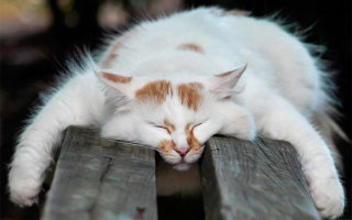 21 Фото «Спящие коты»