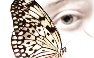 Причта «Урок бабочки»