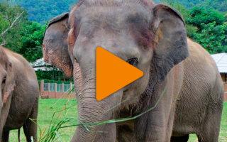 Безмерная любовь слоненка