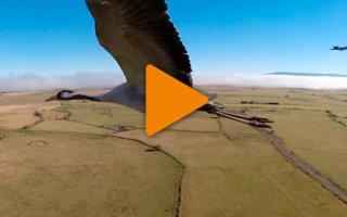 Видео «Невероятный полёт в стае птиц»