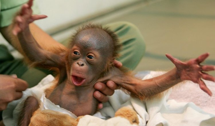 Милые детёныши животных (20+ фото)