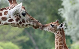 Мама, она и в Африке Мама! (32 фото)