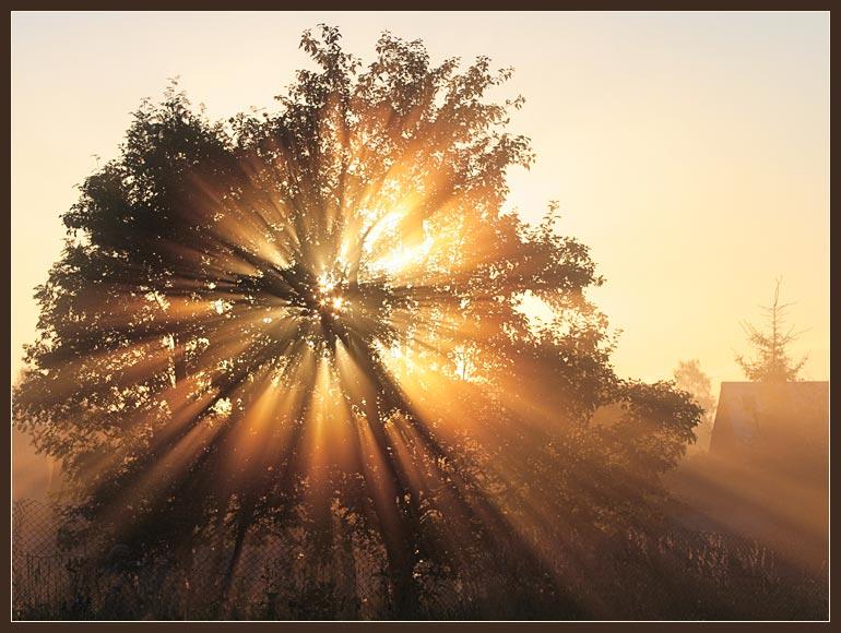 рассвет, природа