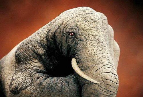 Изображение слона на руках