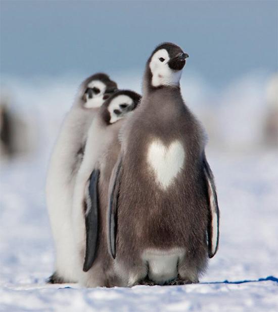 Очаровательные животные с необычным окрасом