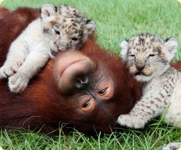 Фото «Этим животным ничто человеческое не чуждо»