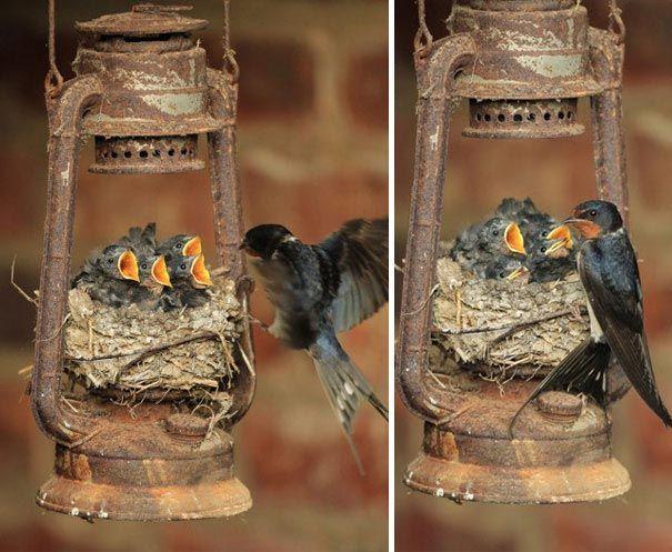 Птичьи гнёзда в самых неожиданных местах