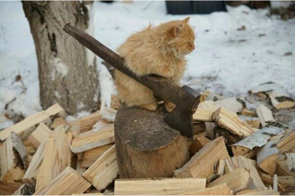 фотографии котов