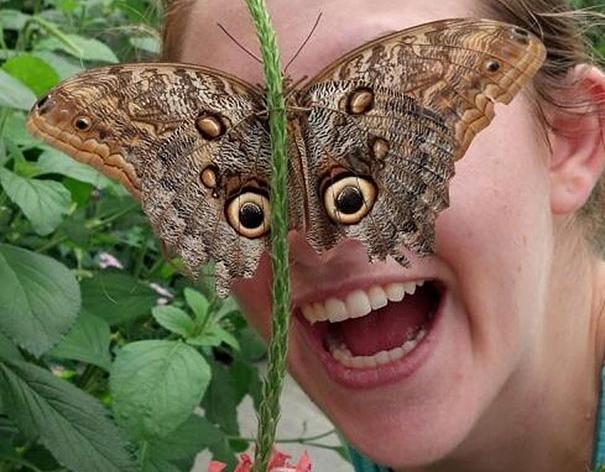 бабочка вместо глаз