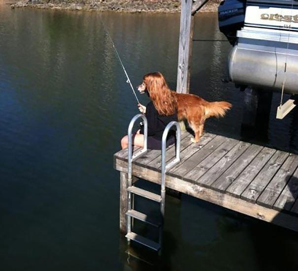 собака удит рыбу
