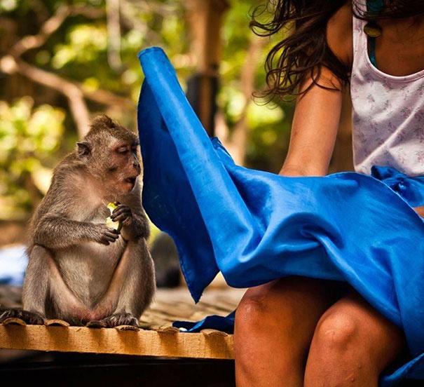 обезьянка смотрит под юбку