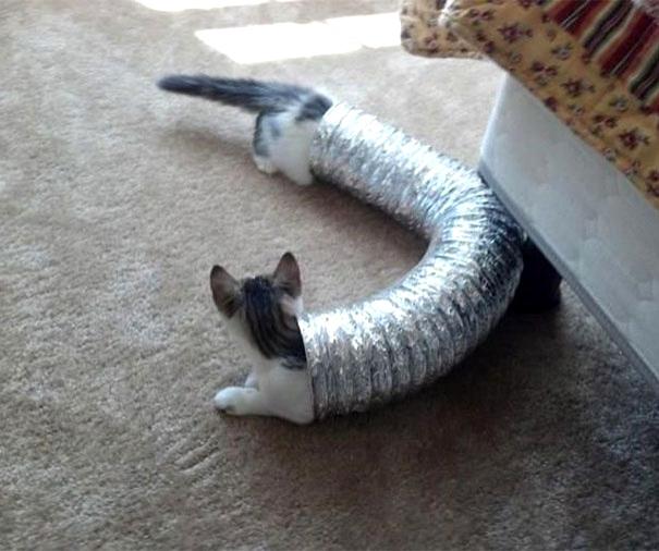 кот залез в гофру