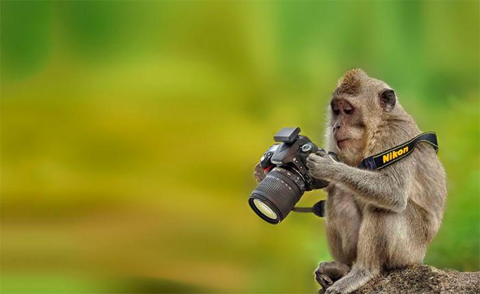 обезьянка фотографирует