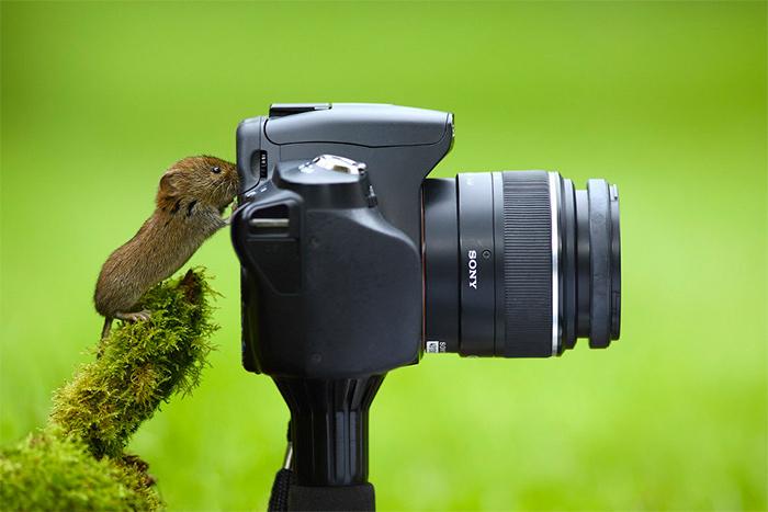 маленький бельчонок фотографирует