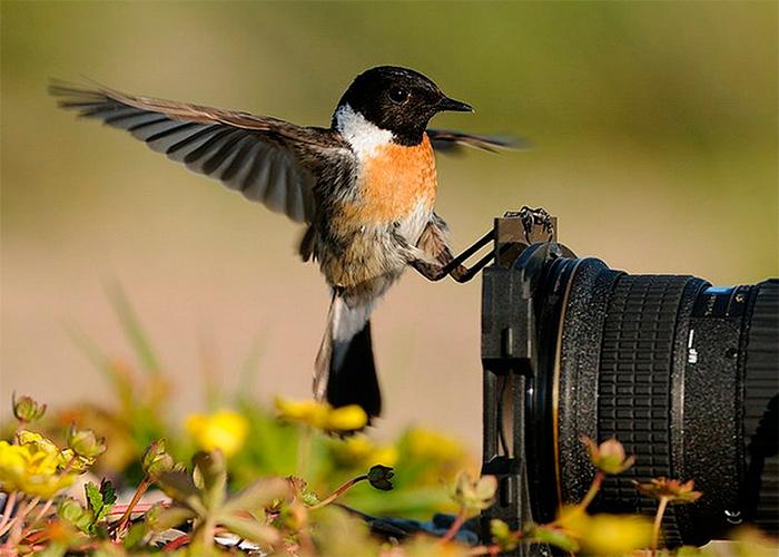 птичка на фотоаппарате