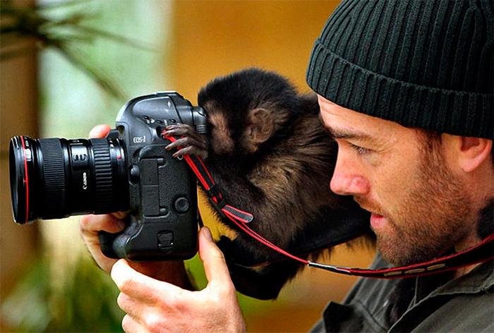 обезьяна смотрит в фотоаппарат