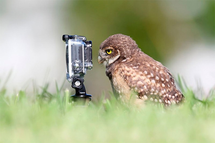 сова с фотоаппаратом