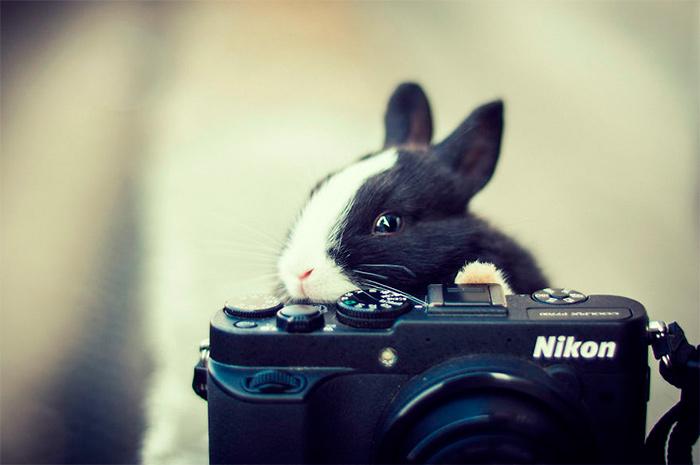 зайчик и фотоаппарат
