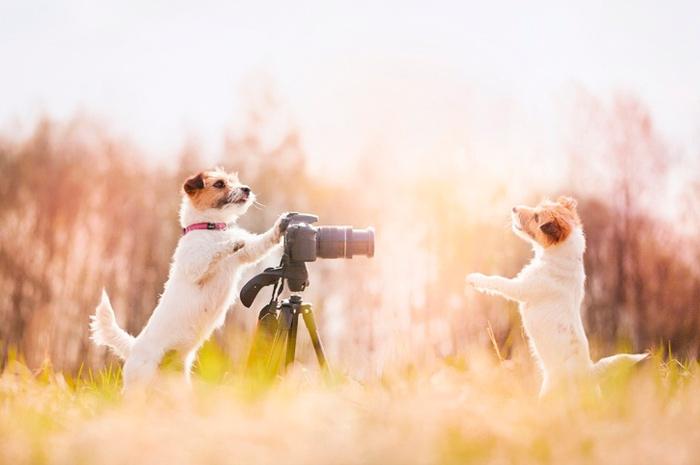две собаки фотографируются
