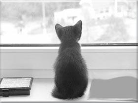 окно, за окном, кот