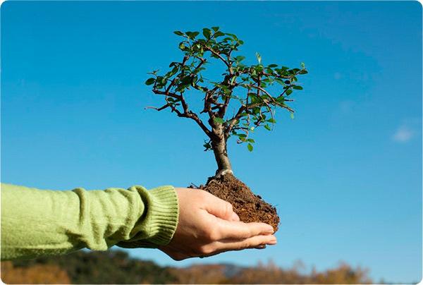 ухаживать за деревом