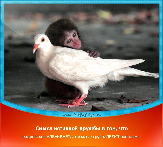 Смысл истинной дружбы в том, что радость она удваивает, а страдание делит пополам