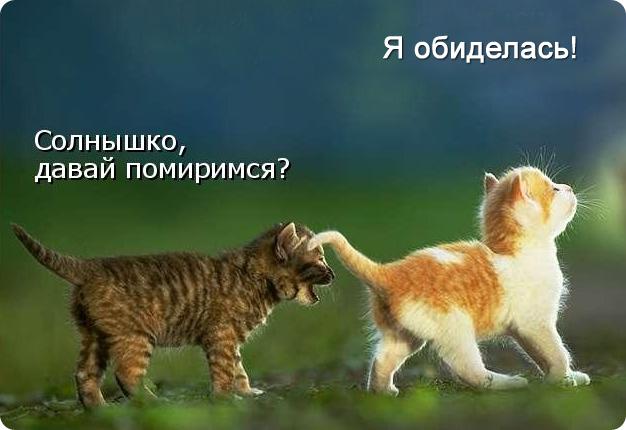 котенок обиделся