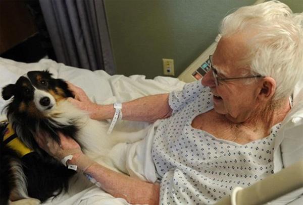собака в больнице со своим питомцем
