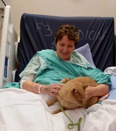 рыжий кот навещает хозяйку в больнице