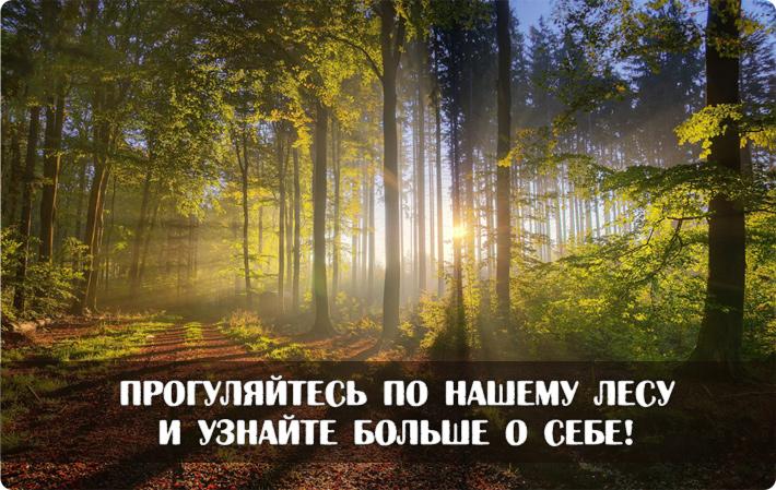 Прогуляйтесь по нашему лесу и узнайте больше о себе!