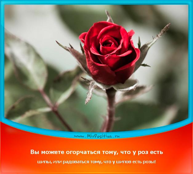 позитивчик дня: Вы можете огорчаться тому, что у роз есть шипы, или радоваться тому, что у шипов есть розы